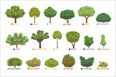 Different Garden Berry Shrubs Sorts With Names Set, Fruit Trees And Berry Bushes Vector Illustration poster