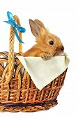 pic of cony  - Red rabbit in basket with blue bow on white background - JPG
