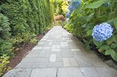 image of hydrangea  - Hydrangea Flowers Blooming Along Concrete Pavers Brick Walkway - JPG