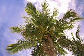 Coconut Sky poster