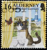 A stamp printed in Alderney Bailiwick of Guernsey shows cat watching a butterfly in the window
