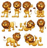 image of lion  - Illustrations of the lions in different positions on a white background - JPG