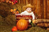 Girl And Harvest Pumpkins