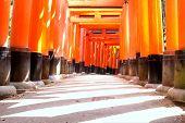 pic of inari  - Fushimi Inari - JPG