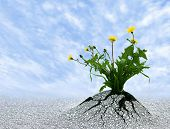 image of persistence  - Symbol for so many things in life - JPG