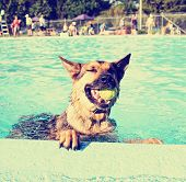 stock photo of pooch  - a cute dog at a local public pool done with a retro vintage instagram filter - JPG