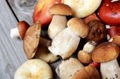 stock photo of boletus edulis  - The raw boletus edulis as a background - JPG