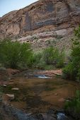 picture of negro  - Creek along the Negro Bill Canyon trail leading towards morning glory bridge