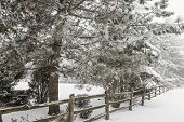 image of wooden fence  - Snowy winter landscape with rural wooden fence and snow covered pine tree - JPG