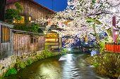 pic of night-blooming  - Kyoto - JPG