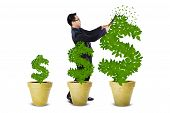 stock photo of indian money  - Asian businessman taking care of the leaves of money trees - JPG