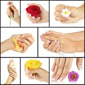 picture of french manicure  - Hands with french manicure and flower isolated on white in collage - JPG