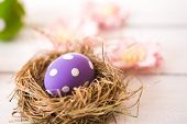 picture of bird egg  - Easter eggs in a bird - JPG
