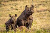 image of mums  - Black white rhino mum and baby standing tall on termite hill - JPG