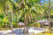 picture of beachfront  - tropical beach with palm trees and beach beds - JPG