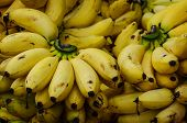 pic of bunch bananas  - Bunch of ripe bananas at a street market - JPG