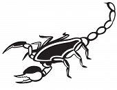 image of scorpion  - Scorpion Pandinus imperator - JPG