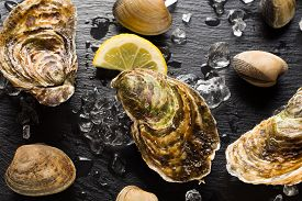 pic of oyster shell  - Fresh oysters and clams on a black stone plate top view - JPG