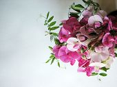 stock photo of sweet pea  - Pink sweet pea with copy space for background image - JPG