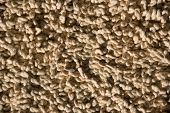 Closeup Of Twisty Wool Carpet