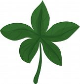 stock photo of chloroplast  - illustration of leaf on a white background - JPG