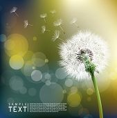 stock photo of dandelion  - Vector Dandelion - JPG