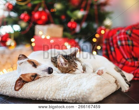 poster of Cat and dog sleeping under christmas tree. Pets friends. Happy New Year