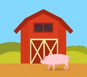 Pig In Nature Of Farm Ranch. Red Barn Place For Swine To Live Livestock Breeding And Farming Piglet, poster