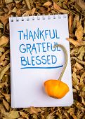 thankful, grateful, blessed  spiritual words - handwriting in an art sketchbook with oranmental gour poster