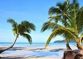 Постер, плакат: Дерево пальмы на тропическом пляже
