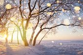 Christmas Background. Winter Nature At Sunset. Snowy Landscape In Golden Sunlight. Frosty Trees. Ama poster