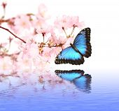 stock photo of butterfly flowers  - Spring blossoms with butterfly - JPG
