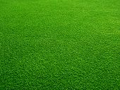foto of golf  - Green grass background - JPG