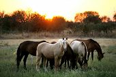 Wild Horses Of Different Colors. Country Side Of Portugal - Alentejo 2 poster