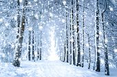 Magical Winter Landscape: Path In The Snowy Forest With Falling Snow poster
