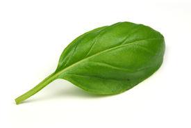 foto of basil leaves  - Green basil leaf on white background - JPG