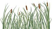 foto of wetland  - Reed and green grass background vector illustration for design - JPG