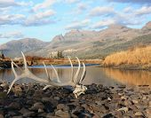 image of antlers  - elk antlers and skull in the backcountry of yellowstone national park - JPG