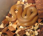 stock photo of harmless snakes  - baby of the house snake  - JPG