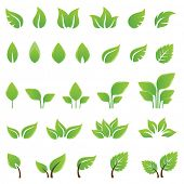 stock photo of birching  - Set of green leaves design elements - JPG