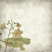 picture of cassia  - textured old paper background with yellow cassia flowers - JPG