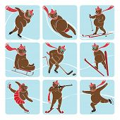 stock photo of bear tracks  - Nine brown bear plays a winter sport  - JPG