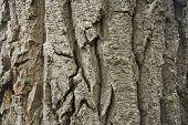 Tree Bark Texture Horizontal poster