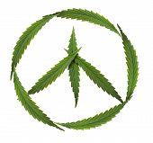 stock photo of rastafari  - symbol of peace - marijuana leaf isolated on white background ** Note: Soft Focus at 100%, best at smaller sizes - JPG