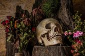 stock photo of corpses  - Still life with a human skull with desert plants cactus roses and dried flowers in a vase beside the timber - JPG