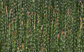 pic of horsetail  - Horsetail forest thickets on the river bank - JPG