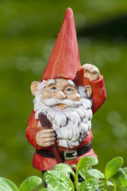 stock photo of gnome  - Little funny garden gnome in the garden behind small seedlings of herbs - JPG