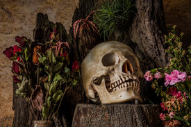 foto of morbid  - Still life with a human skull with desert plants cactus roses and dried flowers in a vase beside the timber - JPG