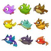 image of colibri  - Set of funny cartoon birds - JPG