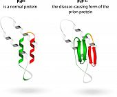 stock photo of viral infection  - Prion an composed of protein in a misfolded form  - JPG